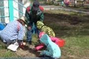 Экологическое волонтерство